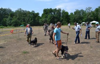 областная выставка охотничьих собак!
