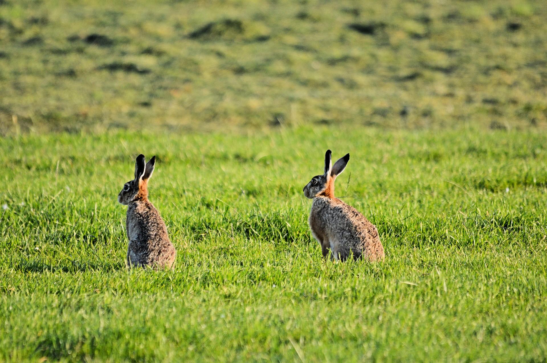 Чем питаются зайцы в разное время года