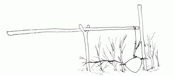 петля на зайца