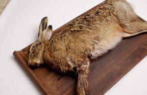 Как приготовить зайца