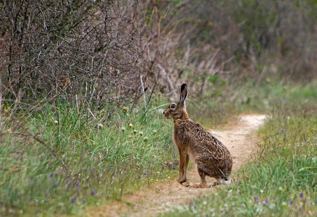 Что едят зайцы в разные времена года