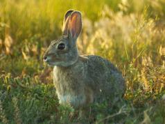 Открытие охоты на зайца