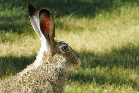 чем питаются зайцы в природе